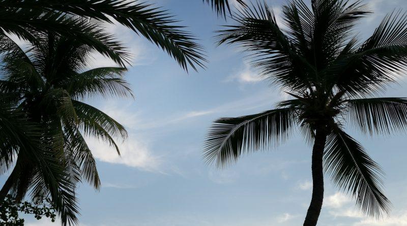 palme cielo thailandia